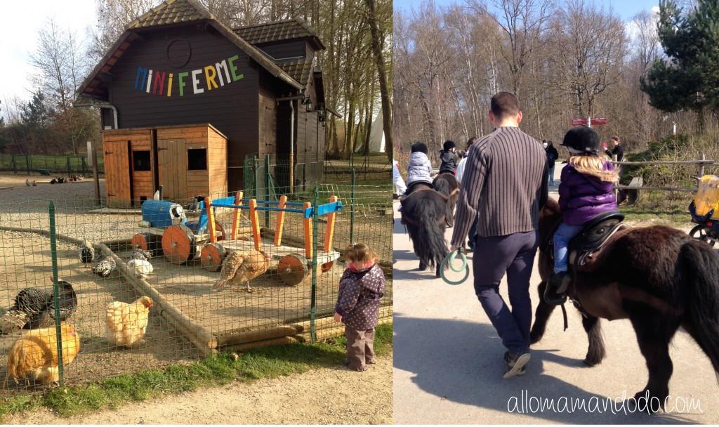 animaux ferme center parc