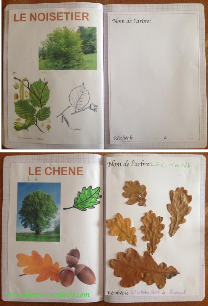 diy vive la for t fabrique ton herbier activit carnet d 39 automne allo maman dodo. Black Bedroom Furniture Sets. Home Design Ideas