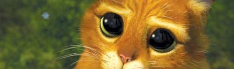 Leur Arme ULTIME: Les Yeux du chat Potté !