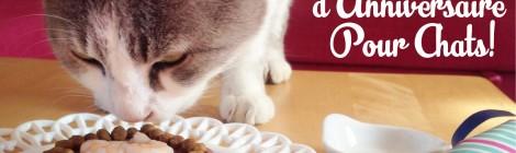 Le Gâteau D'anniversaire Pour Chat!