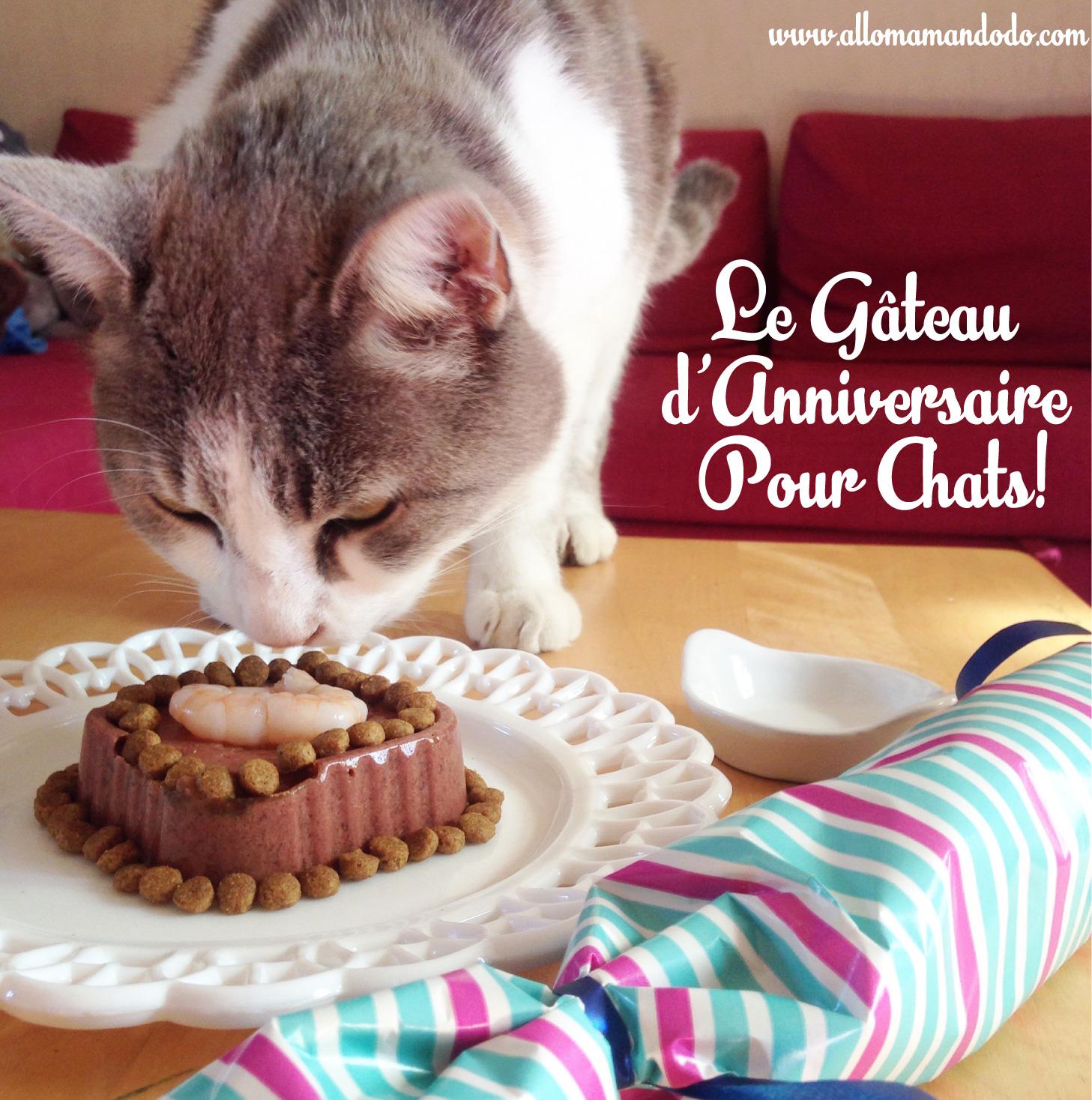 Le Gâteau Danniversaire Pour Chat Allo Maman Dodo