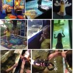 Des visites funs avec l'appli Guideez ! (Aquarium et Jardin aux Papillons de Vannes !)