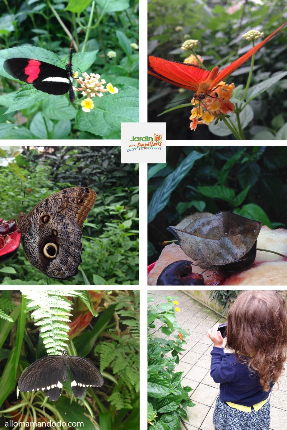 Des visites funs avec l 39 appli guideez aquarium et for Jardin hamel papillon 2016