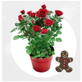 fleurs pot livraison