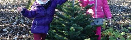 Notre tradition du sapin de Noël dans la foret ( En vidéo! )