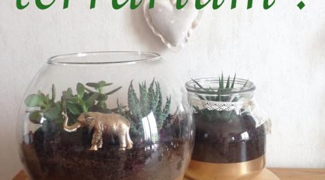 DIY: Le Terrarium, un petit jardin d'intérieur !