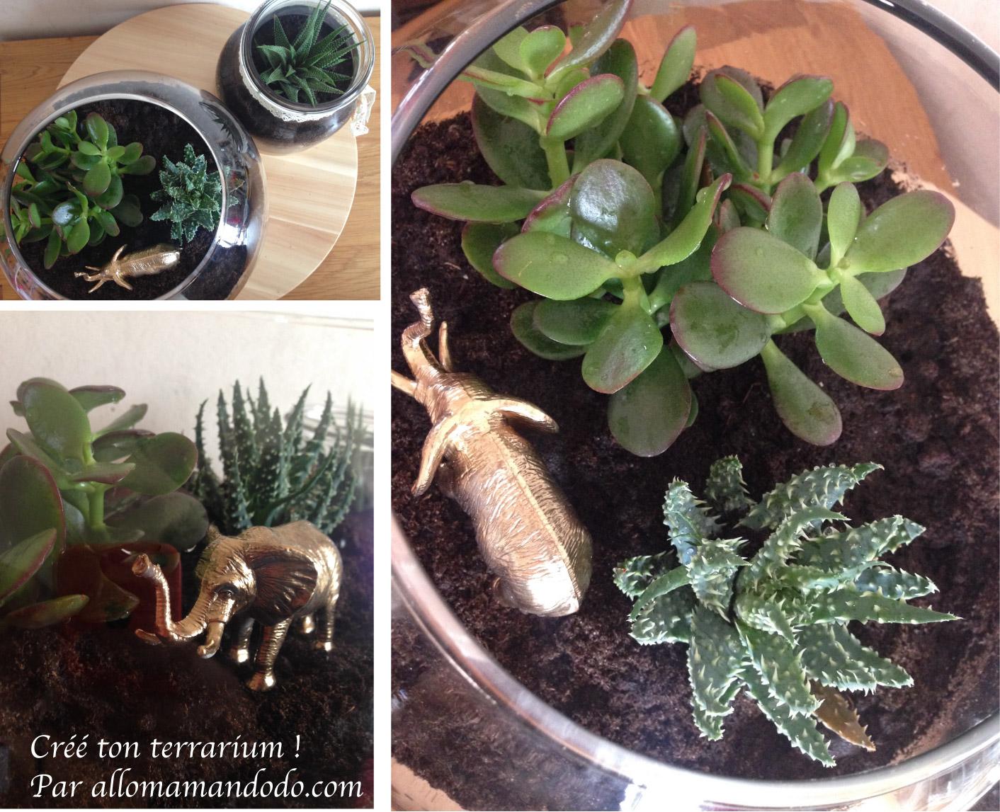 diy le terrarium un petit jardin d 39 int rieur allo maman dodo. Black Bedroom Furniture Sets. Home Design Ideas